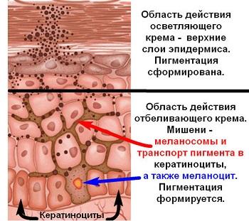 Действие крема от пигментных пятен в эпидермисе