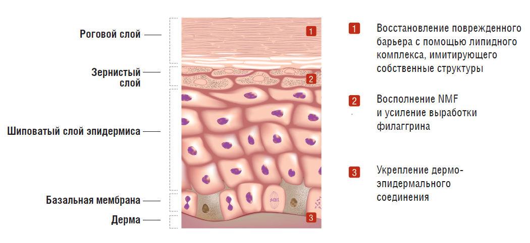 Международные патенты косметики Cell Fusion